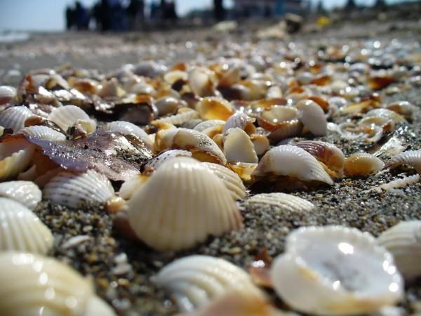 ساحل پاک